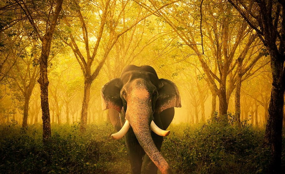 human-wildlife-compenation-elephant