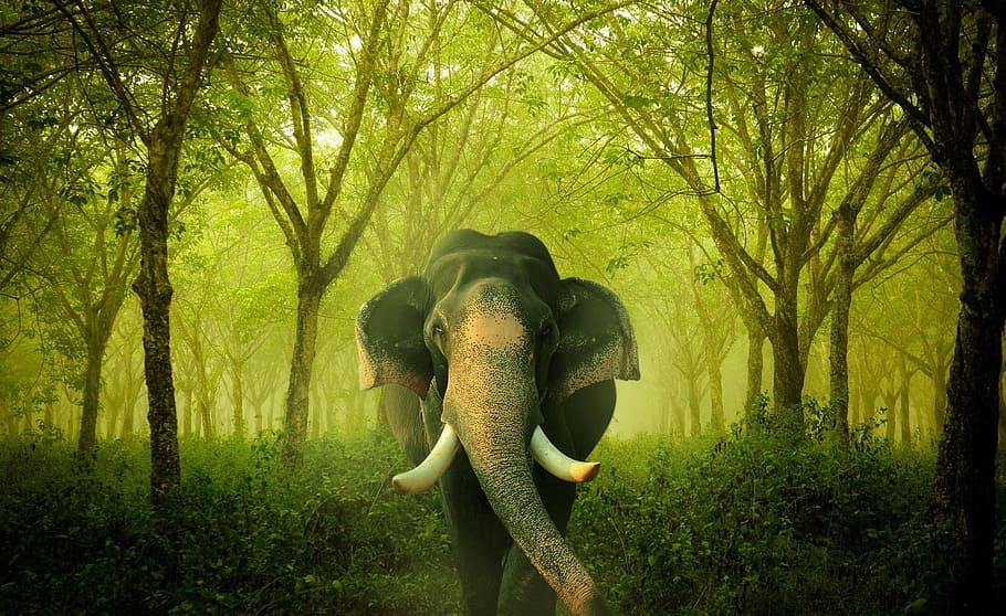 human-wildlife-compensation