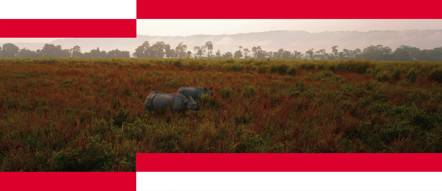 The Success Story of Kaziranga's Tigers – Unpacking the Dichotomy 1